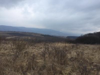GARANT REAL - predaj 2 pozemky, výmera  1194 m2, Červená Voda, okr. Sabinov